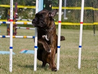 Forest City Dog Training Loves Park Il